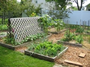 Suburban homesteading - a look back at our first homestead, a 1/2 acre suburban lot with 23 raised beds, grapes, raspberries, fruit trees and tons of flowers.