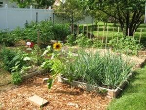 Buckeye Garden 2