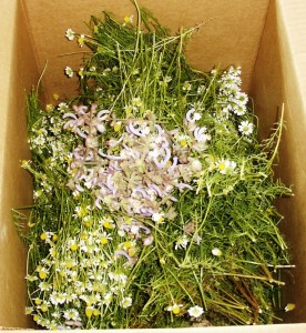 chamomile and clary sage