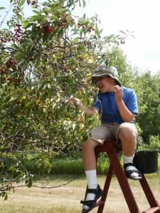 dunc picking cherries