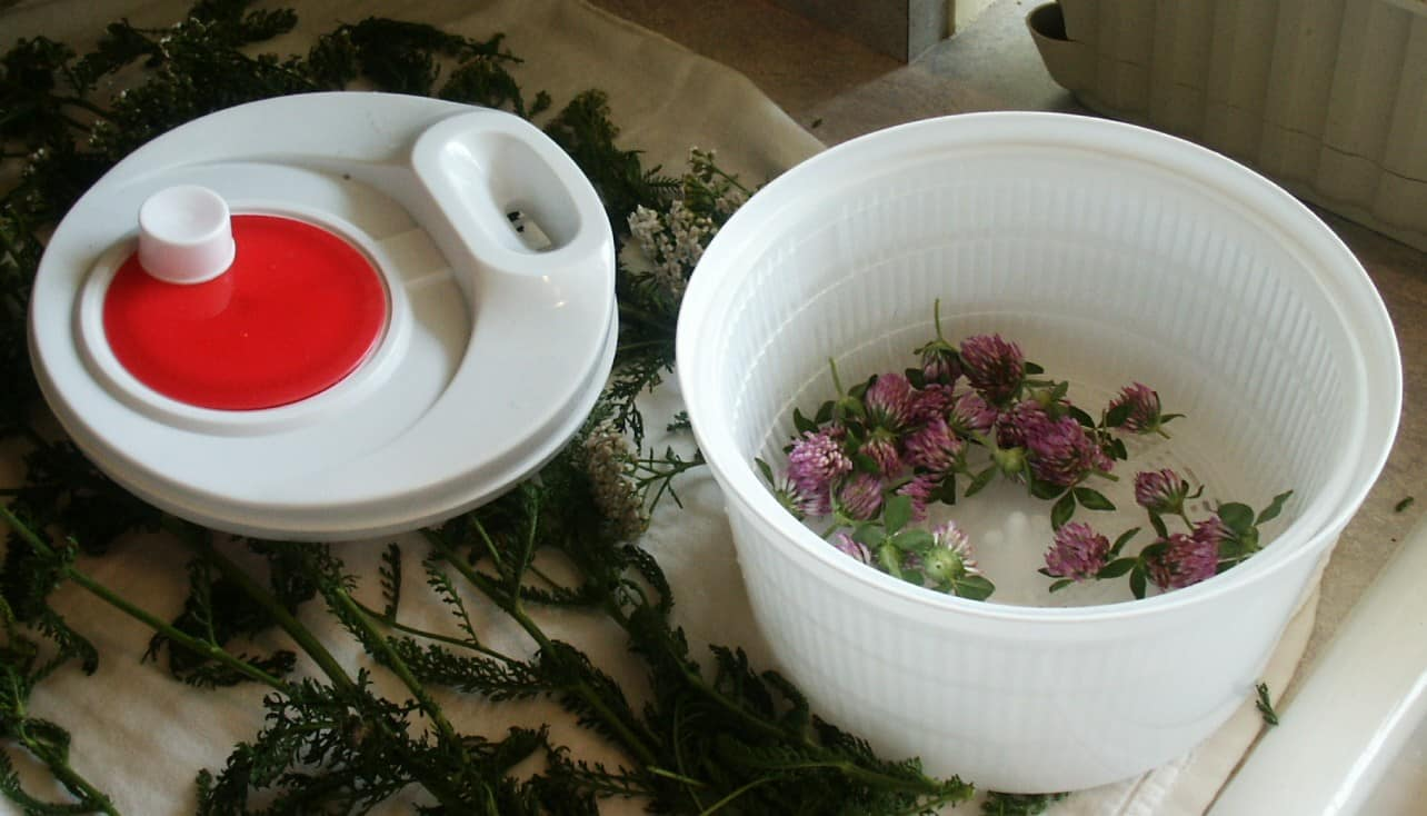 Real Healing Potions - Wildcrafting for Herbal Healing