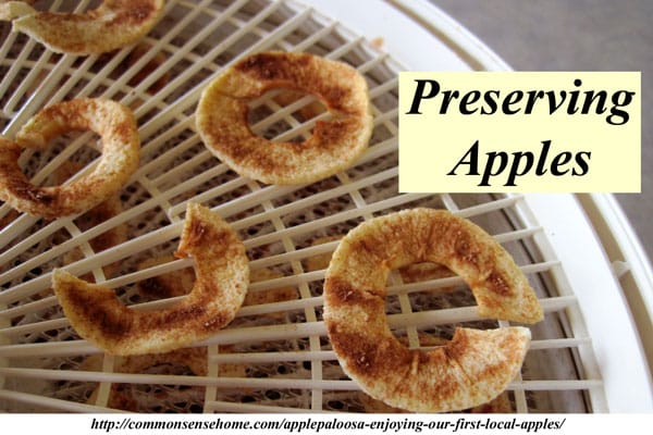 Preserving apples - How to make homemade applesauce, fruit leather, and dried apple rings with cinnamon-sugar. The flavor of homemade is so much better!