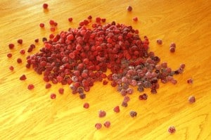 sorting raspberries