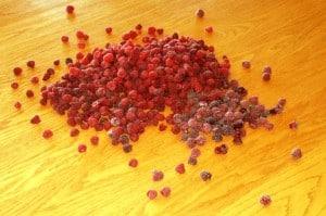 sorting raspberries