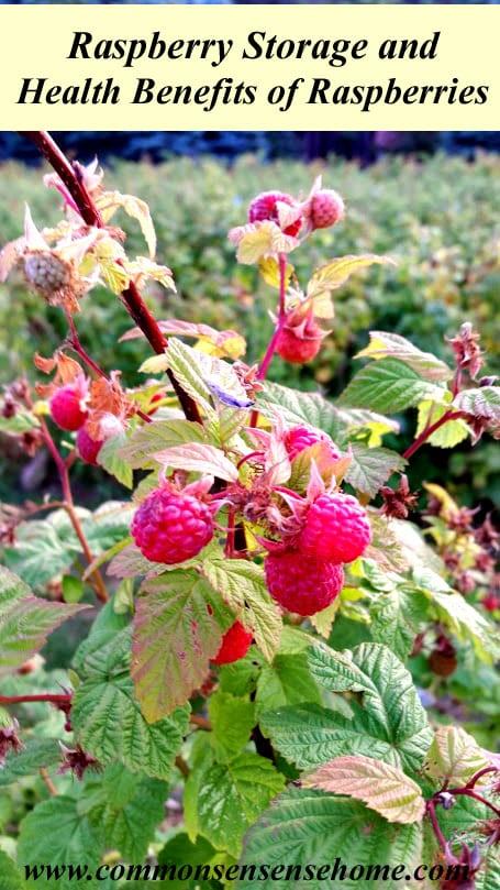 Raspberry Storage and Health Benefits of Raspberries