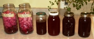 beet kvass finished