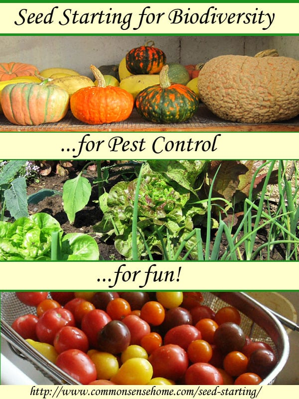 Seed starting for biodiversity, pest control and fun! How to start your own garden transplants to have more plant choices and save money.