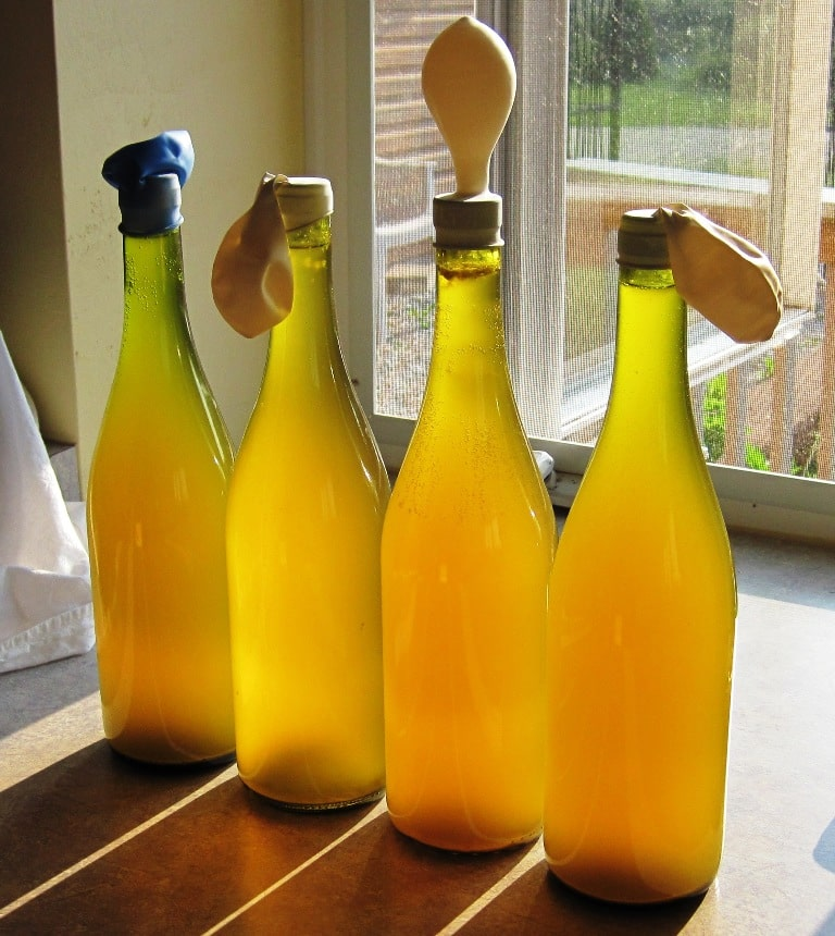 bottled dandelion wine with balloons on top to allow outgassing during final ferment