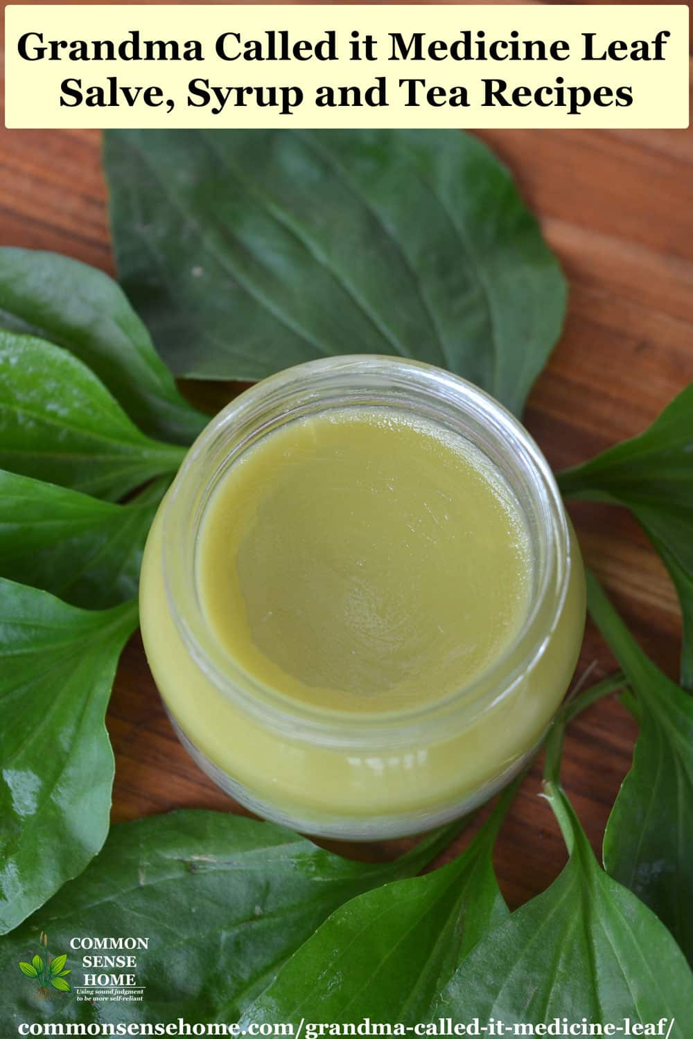 plantain weed salve