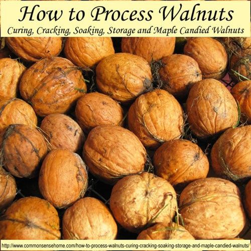 ... Walnuts - Curing, Cracking, Soaking, Storage and Maple Candied Walnuts