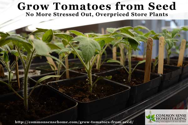 How to Grow Tomatoes from Seed - Save money and grow more varieties by starting your own tomato plants. Tips for soil, containers, transplanting and troubleshooting.