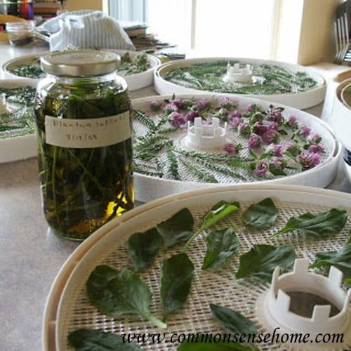 Preparedness – Homegrown Medicinals