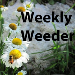 weekly weeder