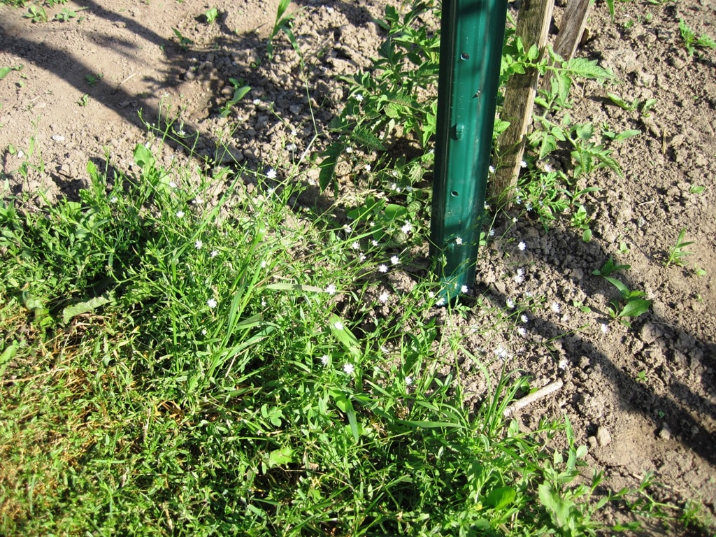 Chickweed weekly weeder 2 for Fertile soil 07