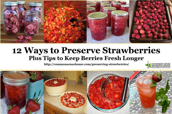 Tips for fresh strawberry storage, my favorite ways of preserving strawberries for long term storage, and some fun strawberry storage ideas from friends.