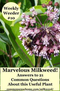 milkweed plant with flowers