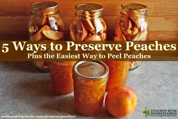 Preserve peaches to enjoy year round through canning, dehydrating, freezing, freeze drying or jam. Simple step-by-step instructions make it easy!