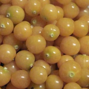 ground-cherries