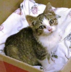 Shiver in a box