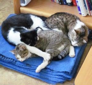 kitten pile 02