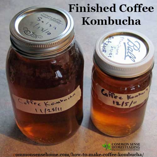 How to brew Coffee Kombucha with a kombucha SCOBY and sweetened coffee for a probiotic twist on your morning coffee habit.