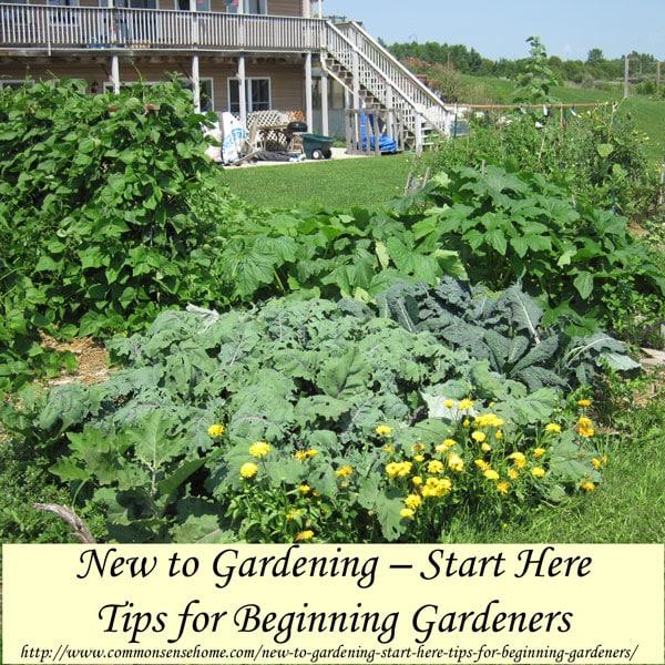 New To Gardening Start Here Tips For Beginning Gardeners