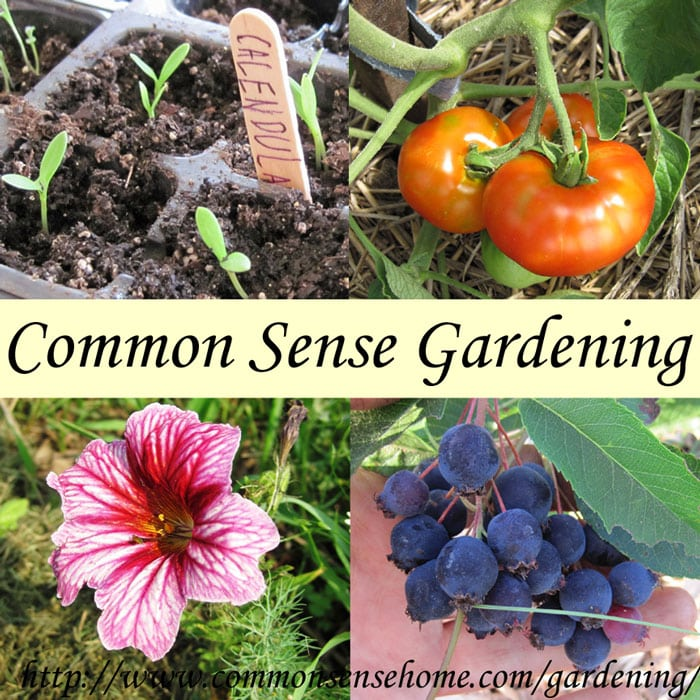 Common Sense Gardening - Over 40 articles featuring seed starting, seed sources, wildcrafting, soil testing, growing transplants, specific crops, vertical gardening/trellising and more.