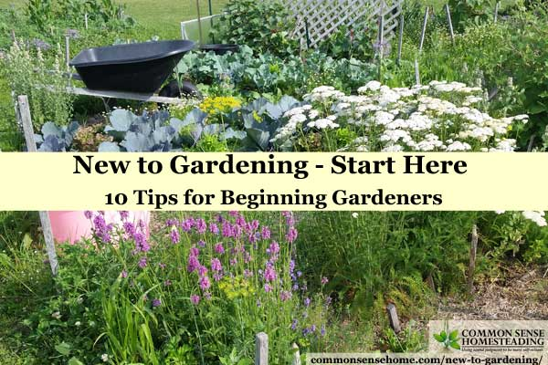 New to gardening? Check out these 10 tips to get you started without being overwhelmed, and get ready to grow your own vegetables, fruits and herbs.
