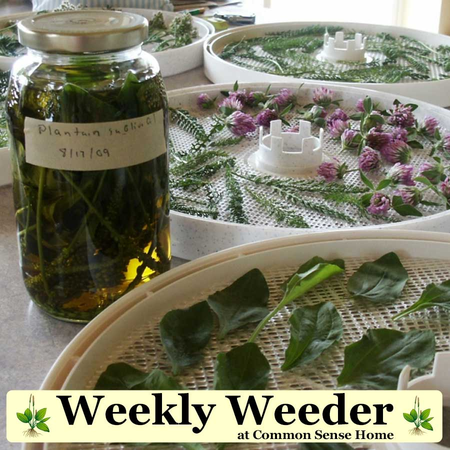 Weekly Weeder at Common Sense Home - drying herbs