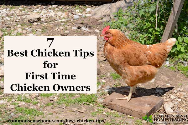 7 Best Chicken Tips for First Time Chicken Owners