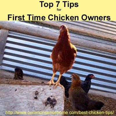 Top 7 Tips for First Time Chicken Owners @ Common Sense Homesteading