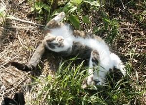 Catnip addict