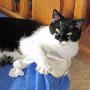 catnip stuffed sock