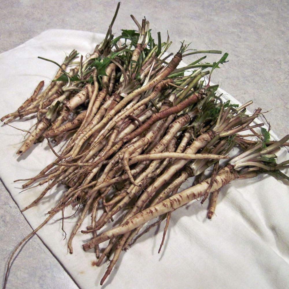 Image of dandelion root