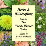 Herbs and Wildcrafting Featuring the Weekly Weeder Series
