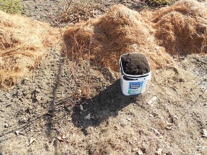 spring soil amendments for blueberries