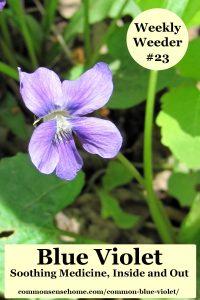 blue violet plant