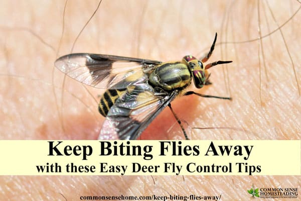 Keep biting flies away from your head with this simple Boy Scout trick, plus other deer fly control tips and deer fly deterrents for yard or campground.