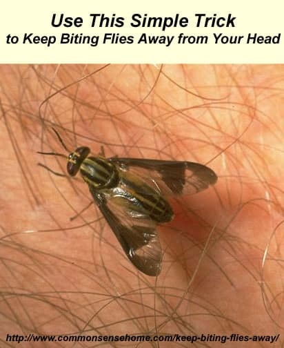 how to stop black flies from biting