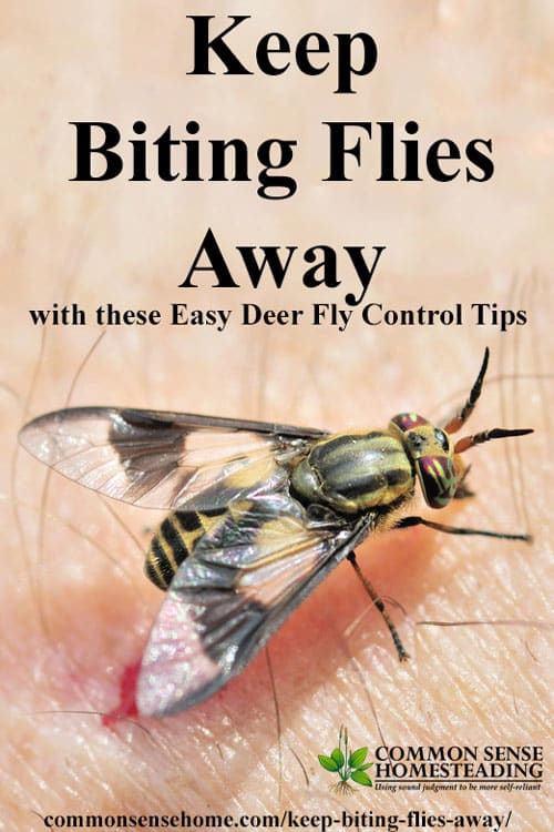 Deer fly control and deterrent tips to keep biting flies away - How to keep deer out of garden home remedies ...