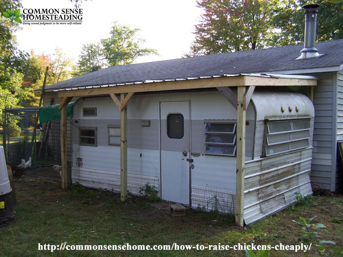 How to Raise Chickens Cheaply - Budget and time friendly tips for coop building, chicken care and raising homestead chickens for eggs.