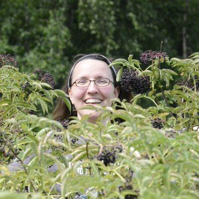 Laurie picking elderberries