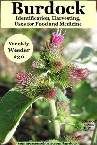 burdock flowers - Weekly Weeder #30