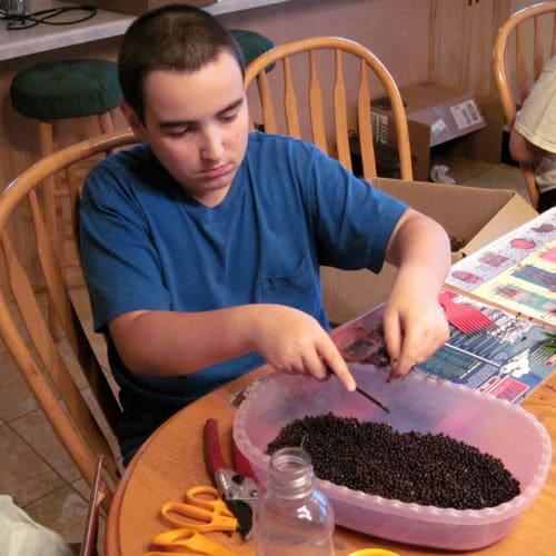 cleaning elderberries