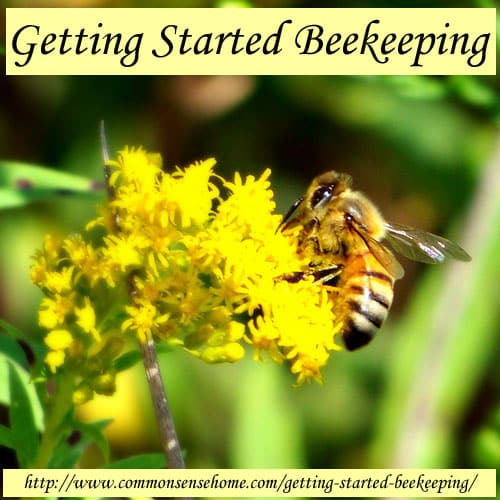 Getting Started Beekeeping @ Common Sense Home