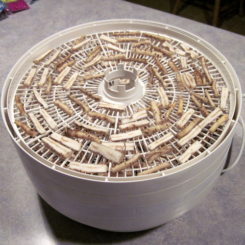 dehydrating dandelion roots
