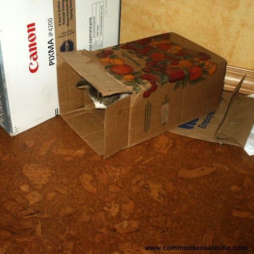 Cork Flooring - Eco-Friendly Flooring