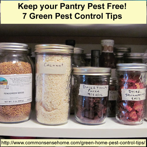 Keep Your Pantry Pest Free - 7 Green Pest Control Tips @ Common Sense Homesteading