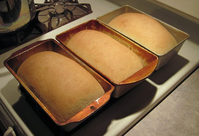 Homemade bread recipes - Sandwich bread