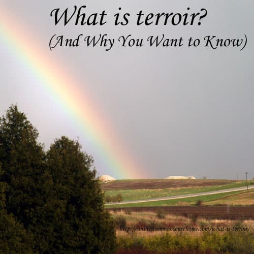 What is terroir?